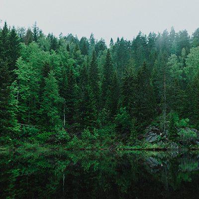 seguro-florestal